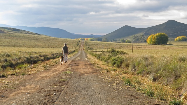 walking the dogs in the karoo at sneeuberg nature reserve