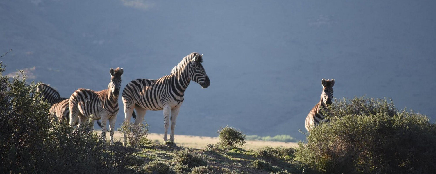 karoo game viewing private nature reserve